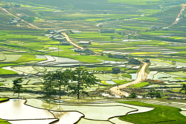 Rice fields in the North of Vietnam - beginning of the crop