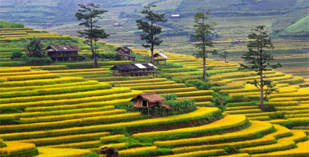 Mu Cang Chai Terraced Rice Fields
