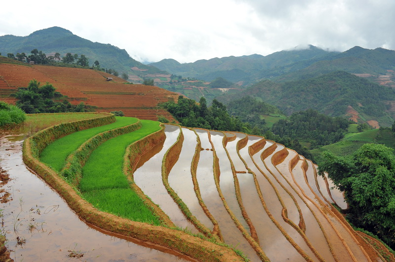 The Start of the Crop in Mu Cang Chai