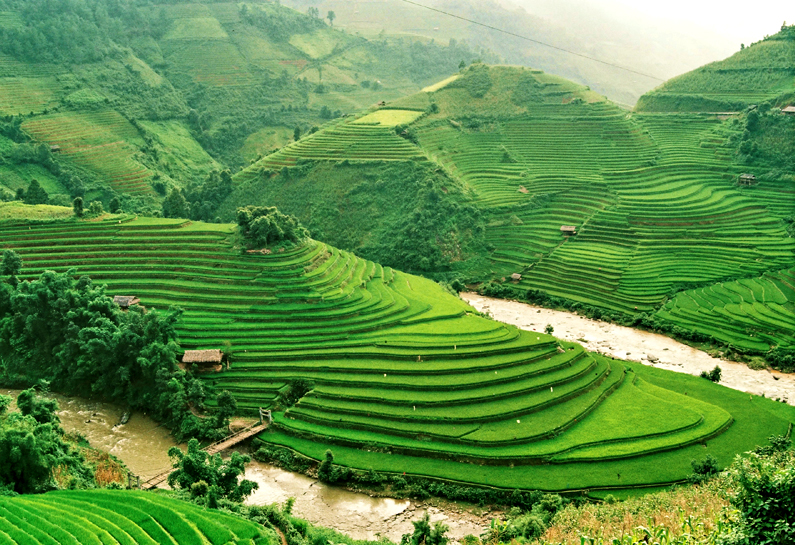 The Middle of the Crop in Mu Cang Chai