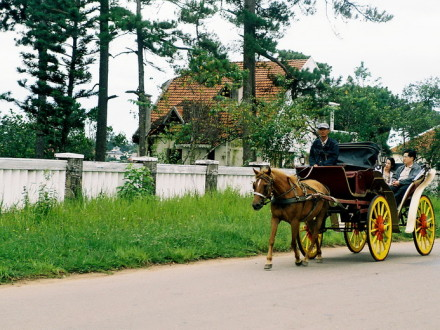 Tourists enjoy their horse carriage riding along the French Street in Dalat