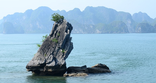 Con Coc Islet in Halong Bay