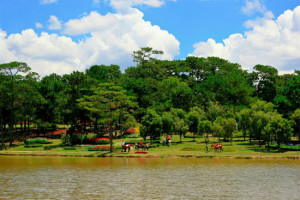 The Pine Hill in Da Lat