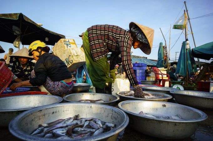 Hoi An fish market in the early morning