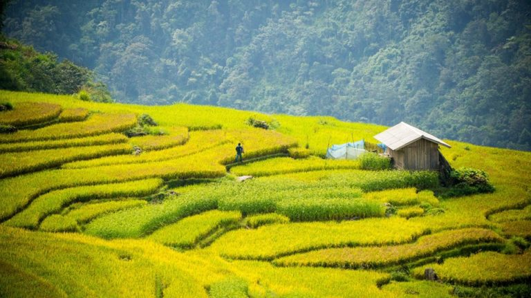 Y Ty Rice Fields, Lao Cai, Vietnam