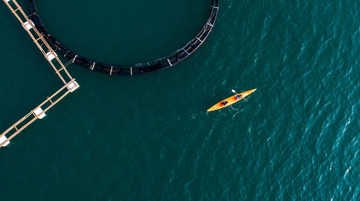 Kayaking from the island to floating farms