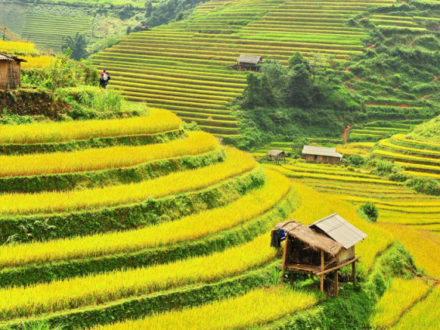 Mu Cang Chai at the end of the crop in October
