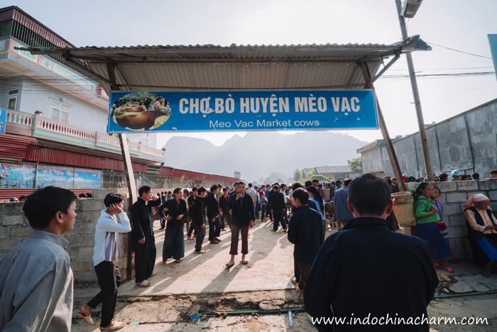 The area specialised in selling cows at Meo Vac Market