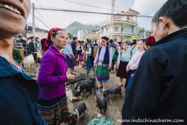 Black pigs sellers at Meo Vac Market in Ha Giang
