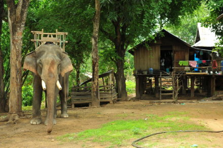 Ride Elephants in Vietnam Central Highlands