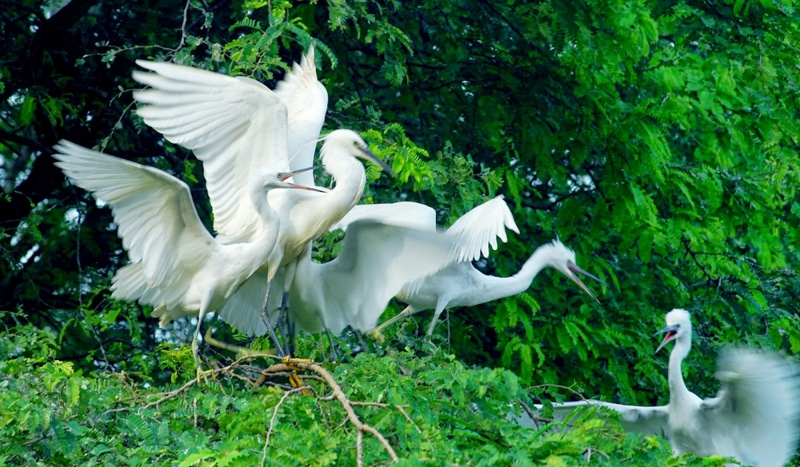 San Chim Nature Reserve is a Bird Sanctuary in the Mekong Delta