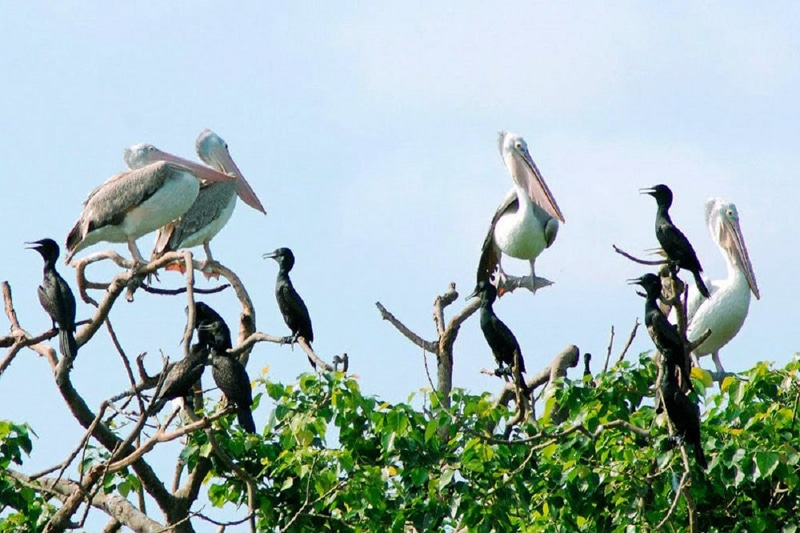 You can find some rare birds at San Chim Bac Lieu Nature Reserve