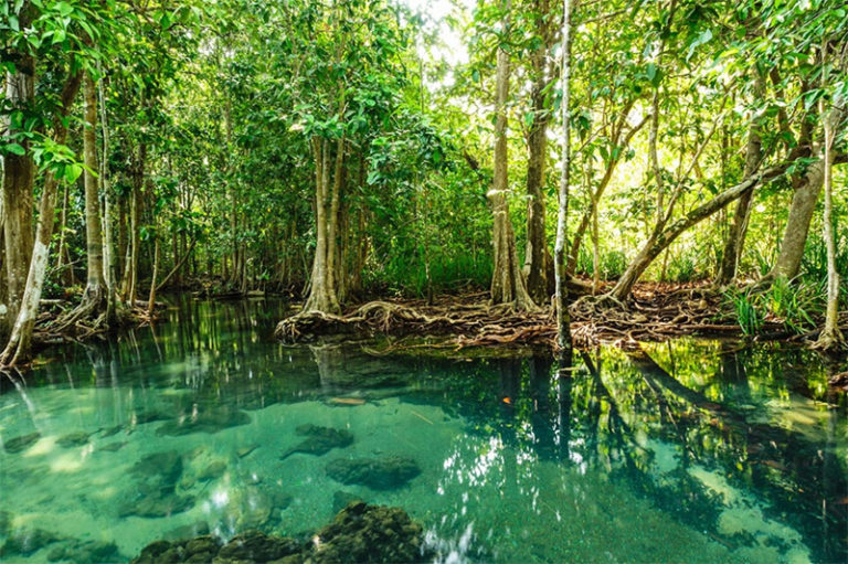 Can Gio Mangrove Biosphere Reserve in the South Vietnam