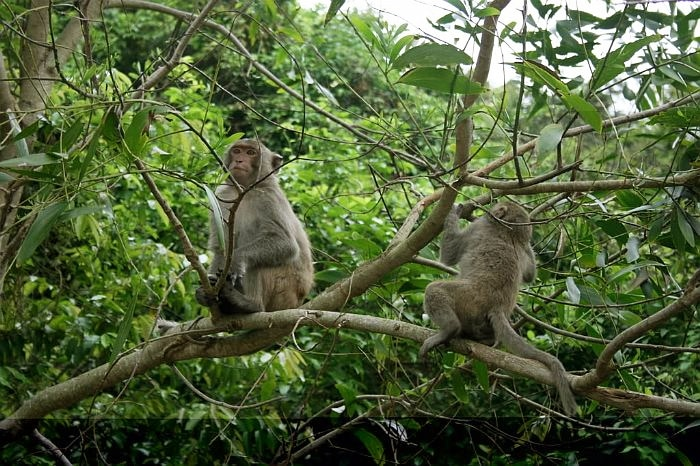 Monkeys in Cat Ba National Park Vietnam
