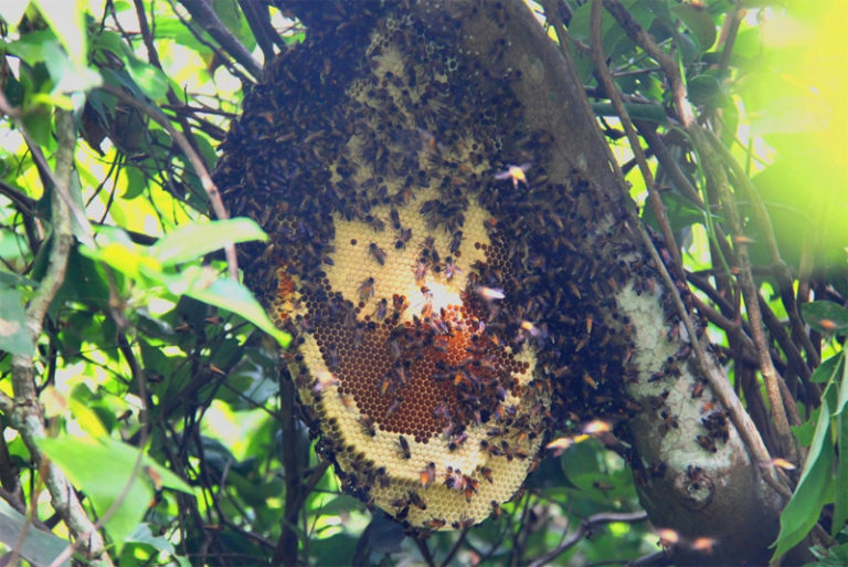 Bee nest at Nung Ngoc Hoang Nature Reserve